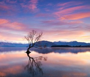 tree-lake-sunset reflection