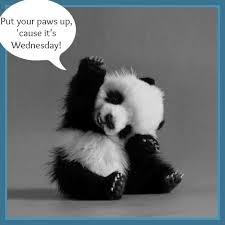 wednesday panda