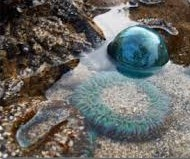 anenome and float