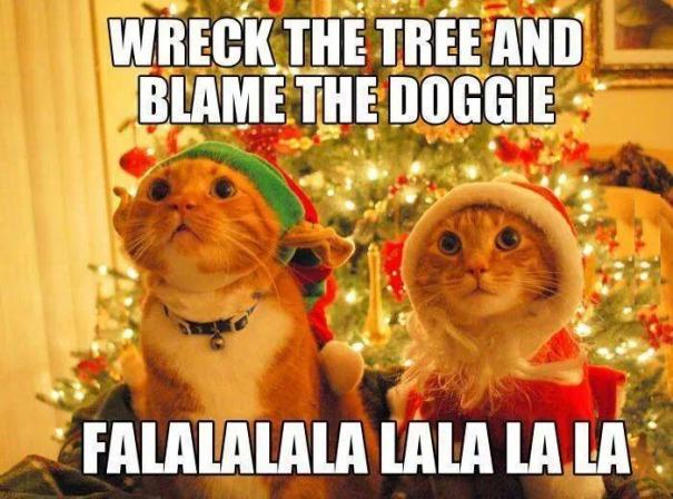 6. blame the doggies