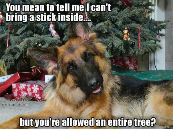 7. dog cant bring stick