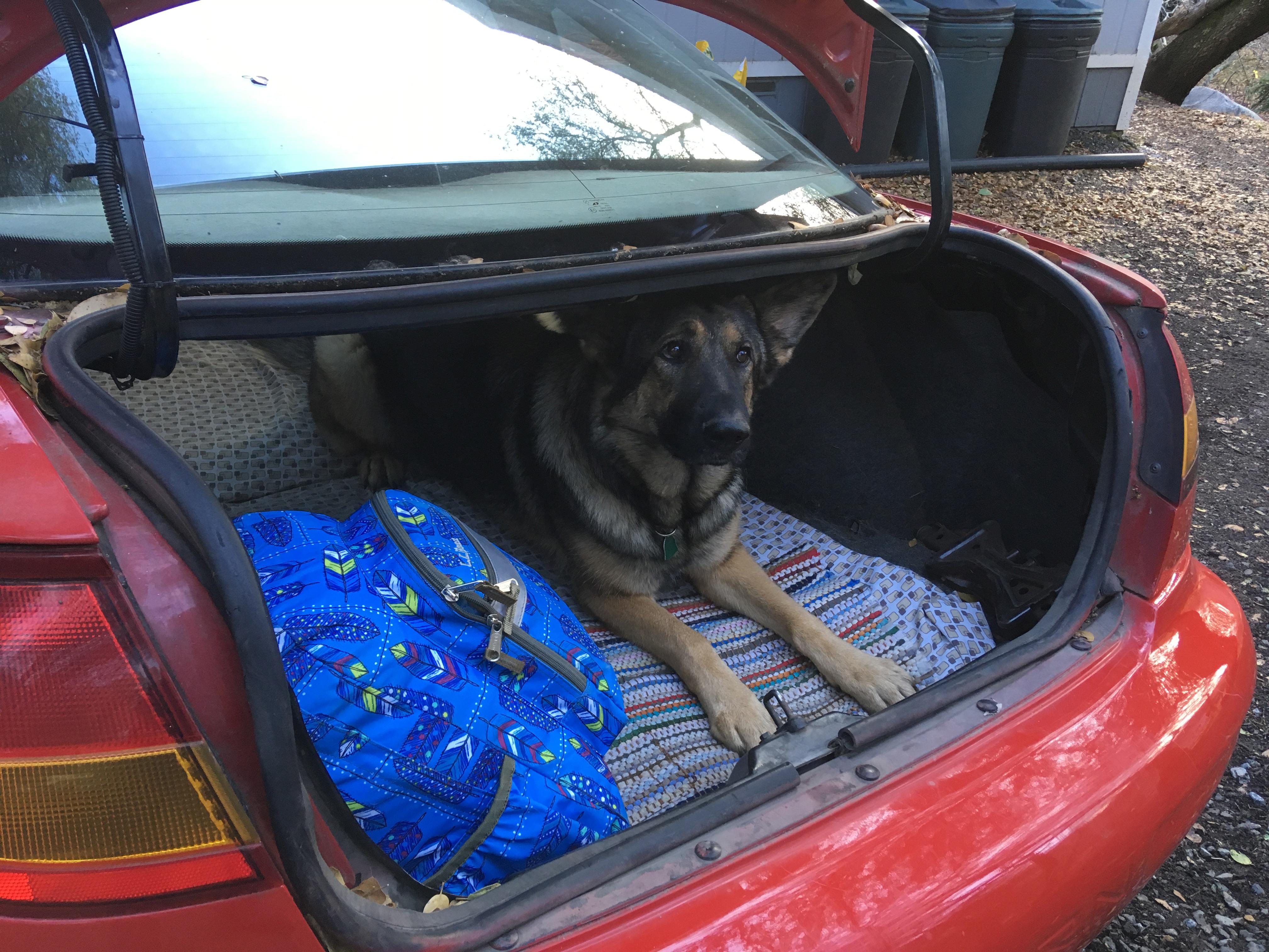 pack in car