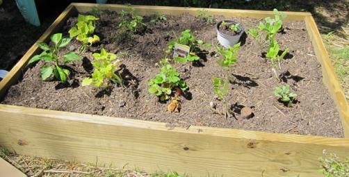 garden1--raised bed