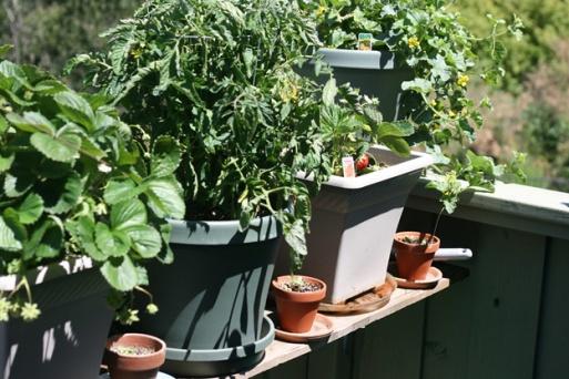 garden3--plants on balcony